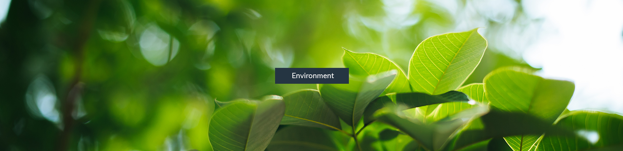 Seneca Scientific Solutions - Environmental studies